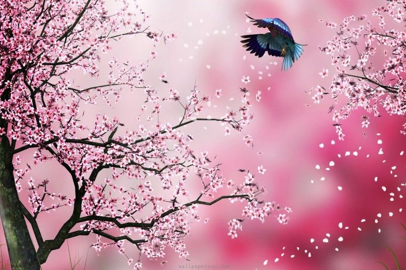 cherry blossom tree widescreen desktop wallpaper