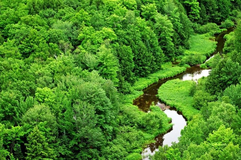 Meandering Stream Wallpaper Landscape Nature Wallpapers