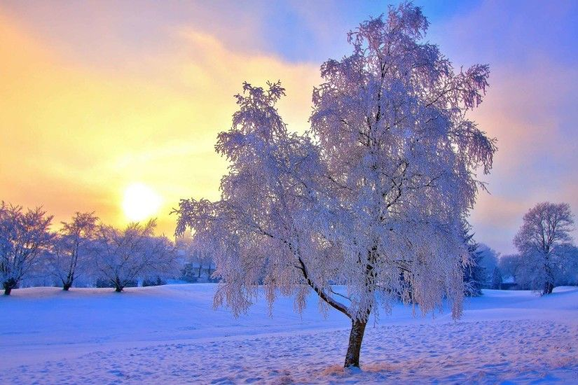 Sunrise Sunset Snow Sky Frost Sun Trees Winter Nature Wallpaper Latest  Download