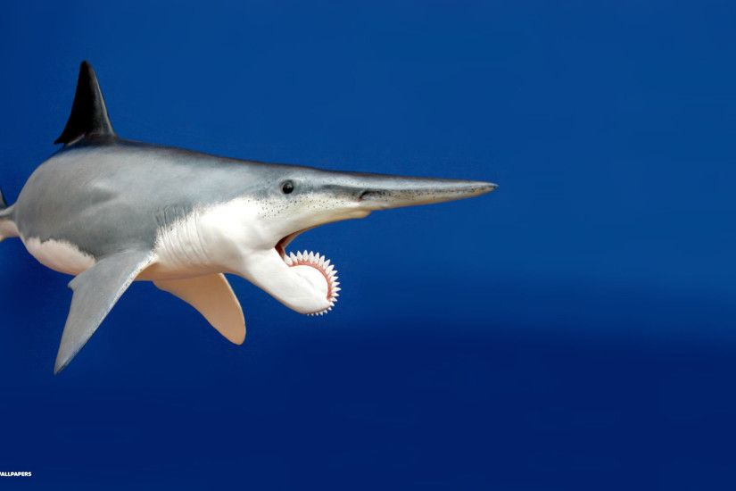 helicoprion hd wallpaper