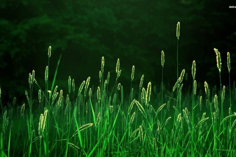 top grass wallpaper 1920x1200 for full hd