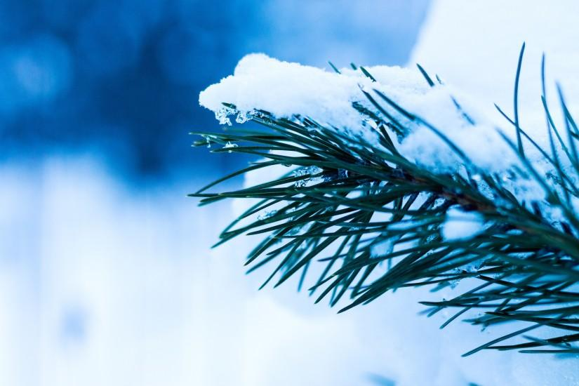 winter-blues-buster-background