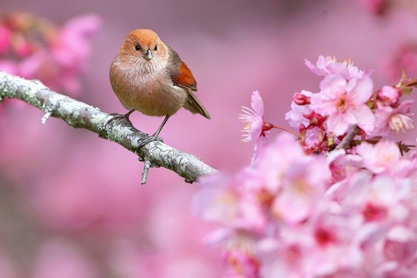 ... For Your Desktop: Spring Flowers And Birds Wallpaper, 41 Top .