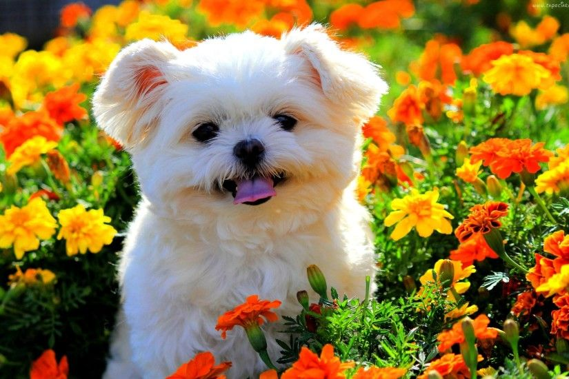 Spring Wallpaper With Animals Wallpapersafari Color Online 30797 .