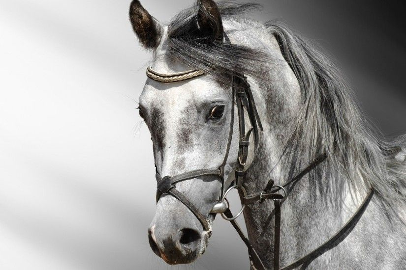 "Search Results for ""black and white horse wallpaper for walls"" – Adorable  Wallpapers"