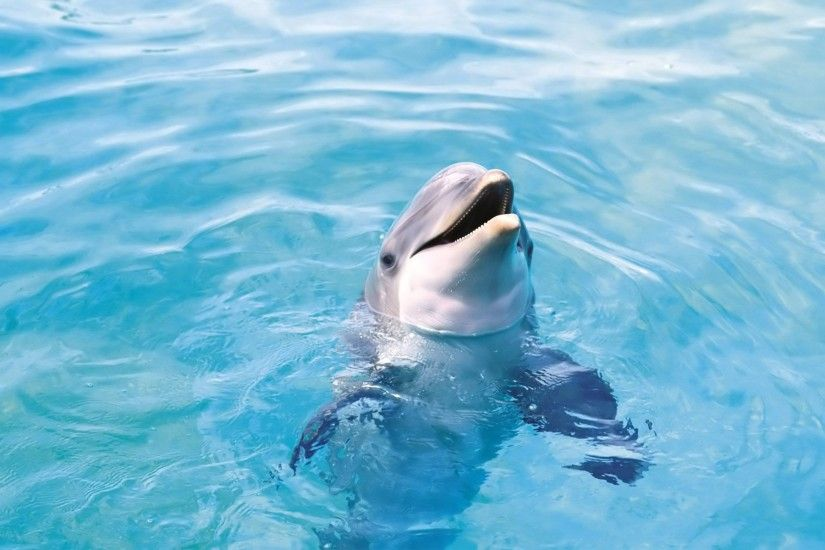 wallpaper.wiki-Free-Dolphin-Backgrounds-PIC-WPB004082