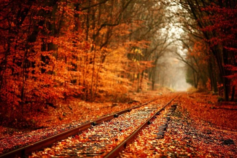 Railroad Through The Fall Woods Wallpaper