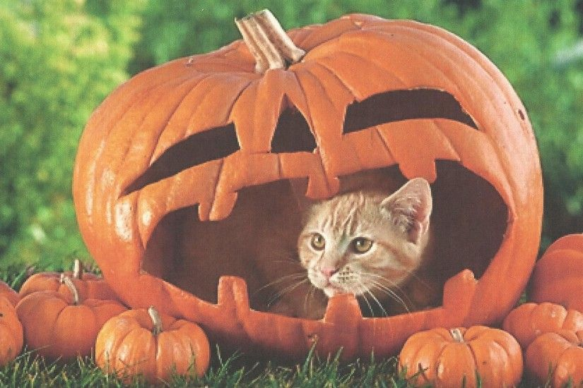 A Halloween Cat In A Pumpkin