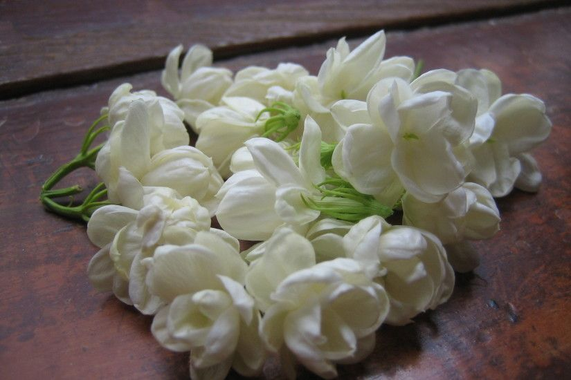 Download Convert View Source. Tagged on : Jasmine Flower Wallpaper ...