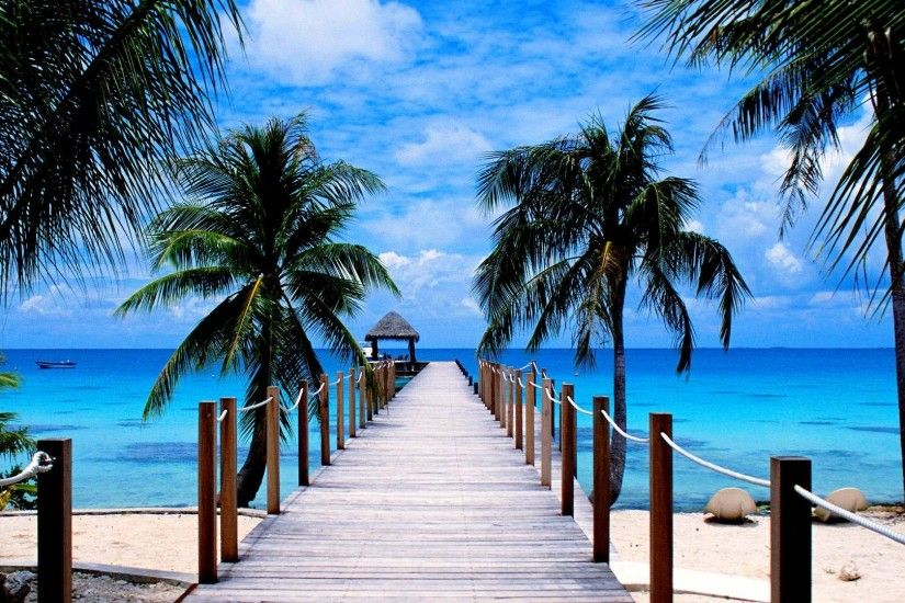 Man Made - Pier Tropical Ocean Palm Tree Horizon Wallpaper