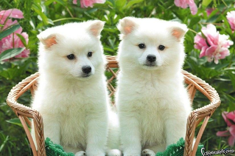 Cute Puppies Desktop Wallpapers - HD Wallpapers Inn
