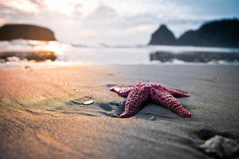 1920x1200 widescreen backgrounds starfish
