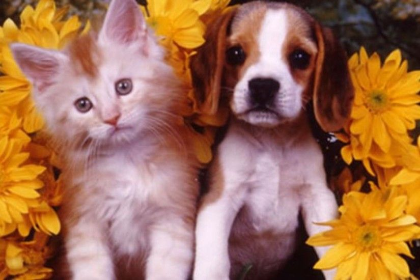 Cute Puppies And Kittens Wallpaper Hrvi Cute Puppies And Kittens