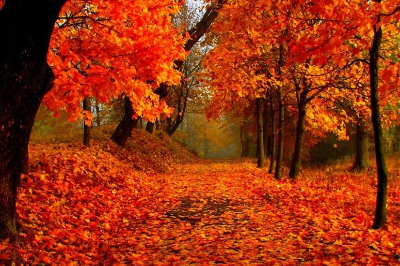 Beautiful Branches Colorful Forest Park Leaves Lovely Autumn Trees Fall  Wallpaper Wide