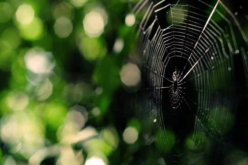 wallpapers free spider web, 1920x1200 (375 kB)
