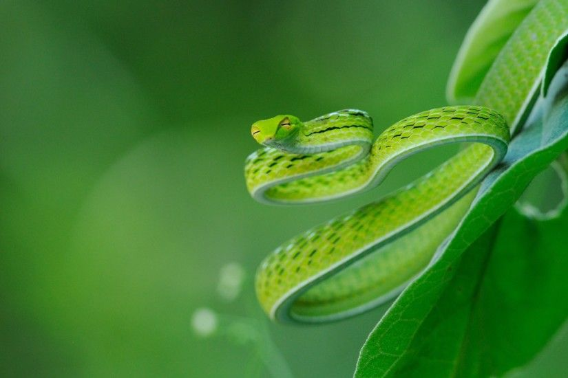 snake desktop wallpaper 15105