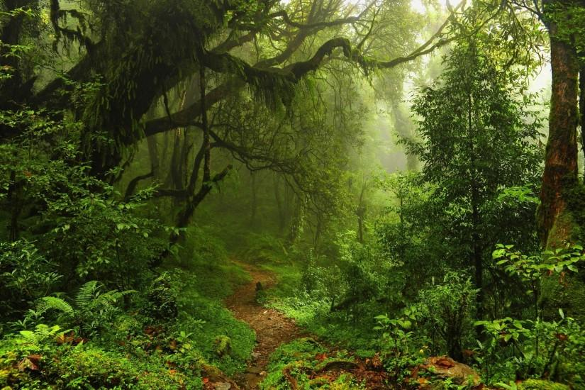 forest-path-wallpaper-background-13093-13550-hd-wallpapers.