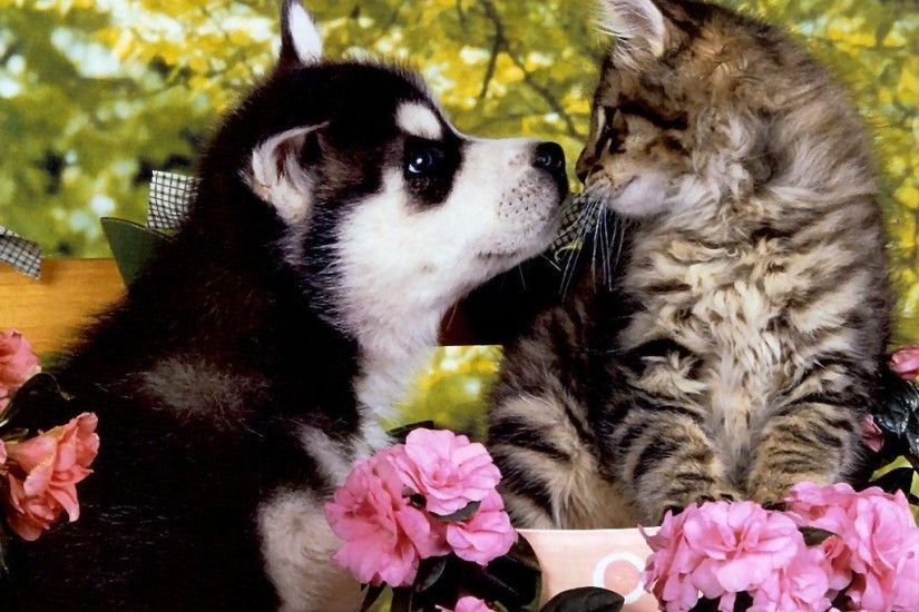 Cute friends - Puppies and kittens Wallpapers and Images - Desktop .