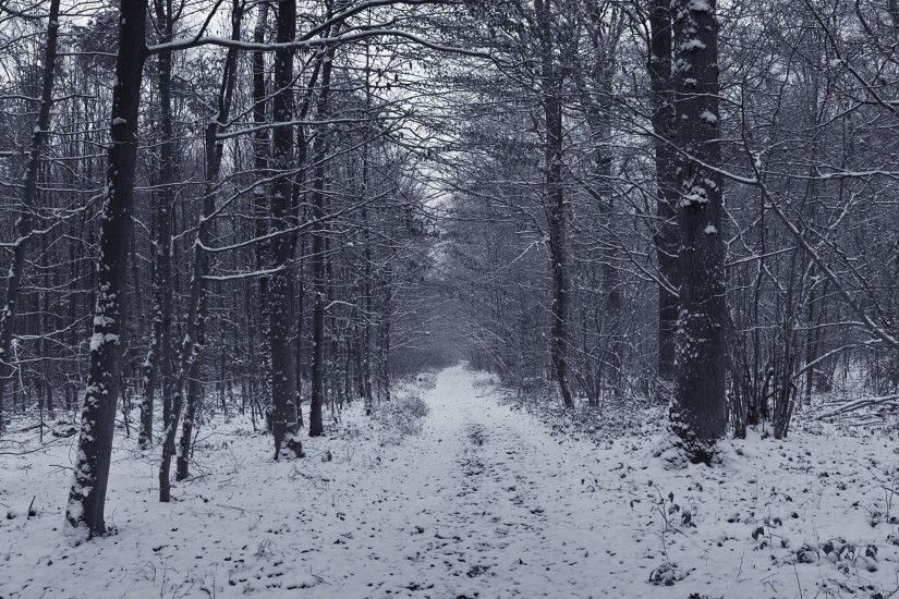 Snowy grey forest firs black white path wallpaper 1070.