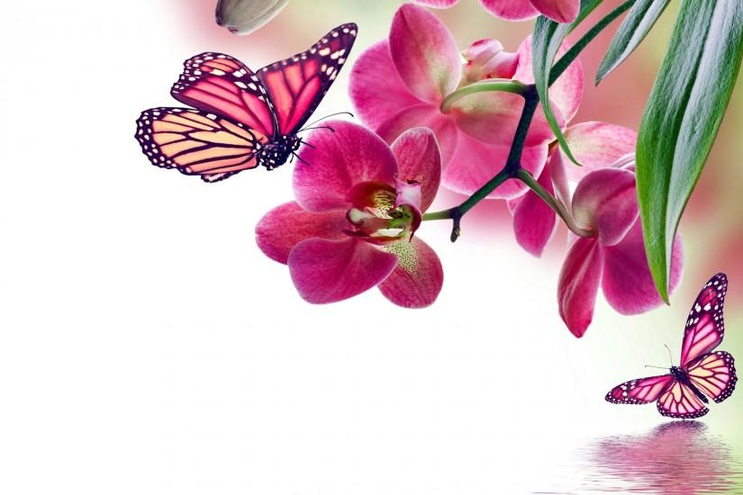 butterfly background 2560x1600 windows 10