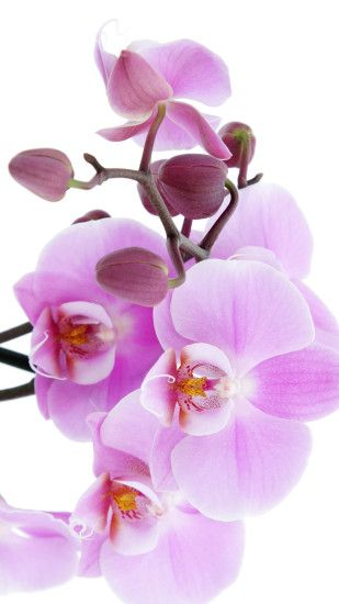 Pure Pink Orchid iPhone 6 wallpaper