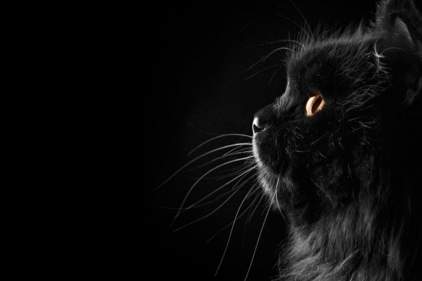 Black Cat Wallpaper 3002 HD Wallpapers | pictwalls.