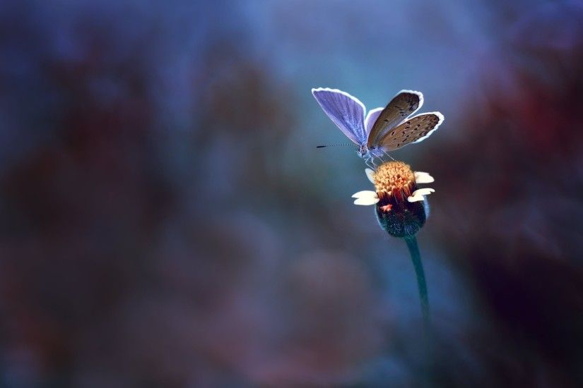 1920x1275 butterfly beautiful background wallpaper