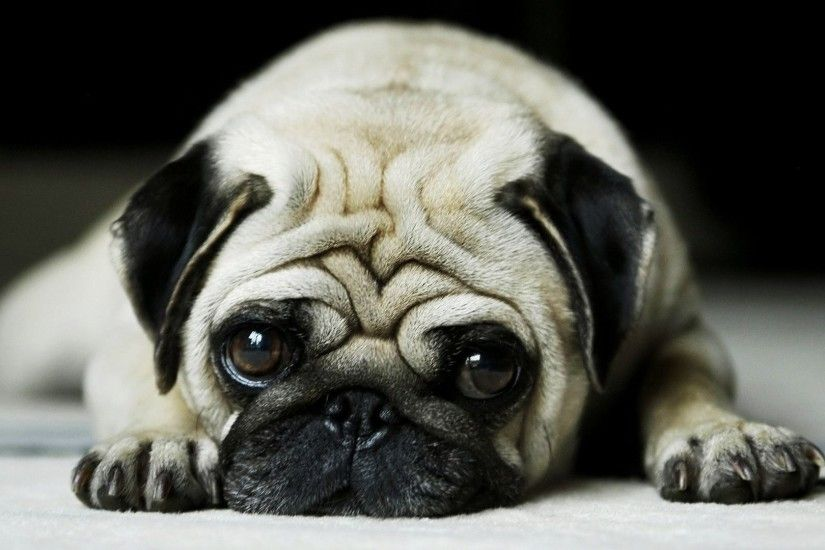 Cute Dogs Wallpapers Wide | HD Wallpapers Wide