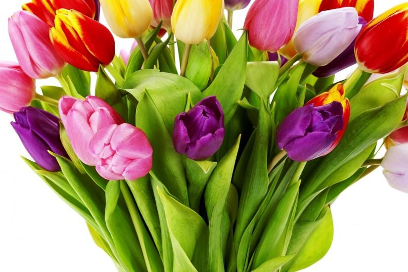 Tulips Flowers Bouquet Bright Vase White Background ...