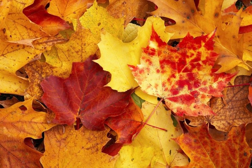 Leaves Yellow Autumn Wallpapers Wallpapers, Backgrounds, Images .