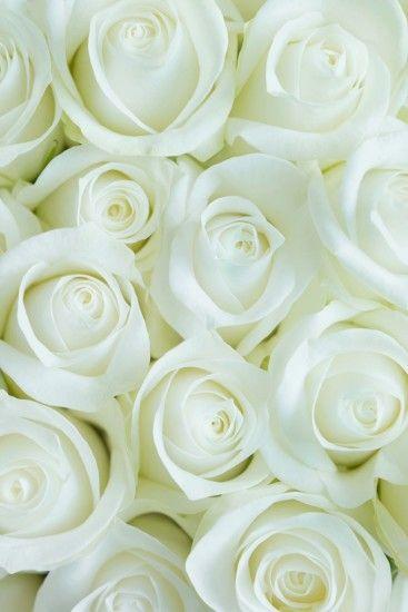 White flower wallpaper wallpaper white roses flower for iphone resolution 1634x2450 mightylinksfo