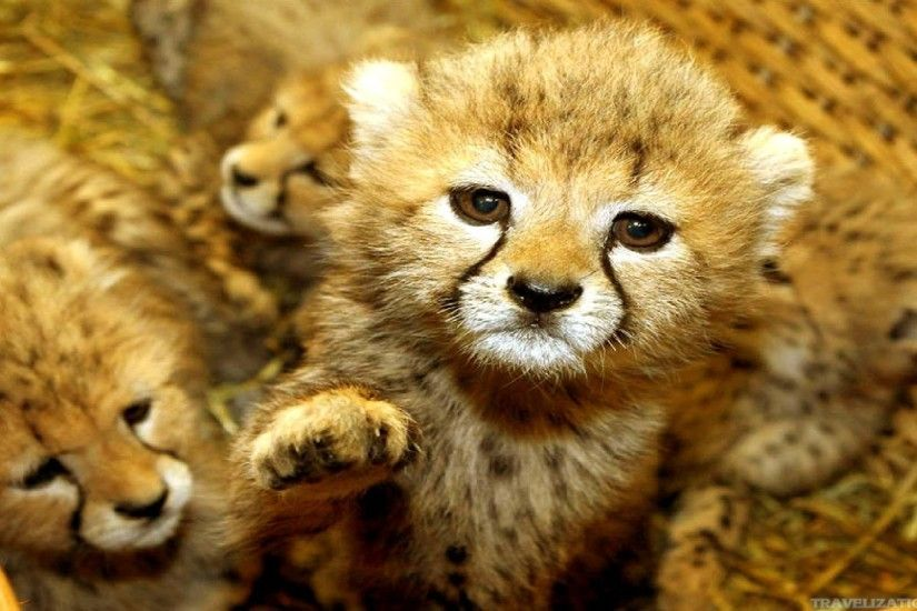 cute animals images wallpapers 046