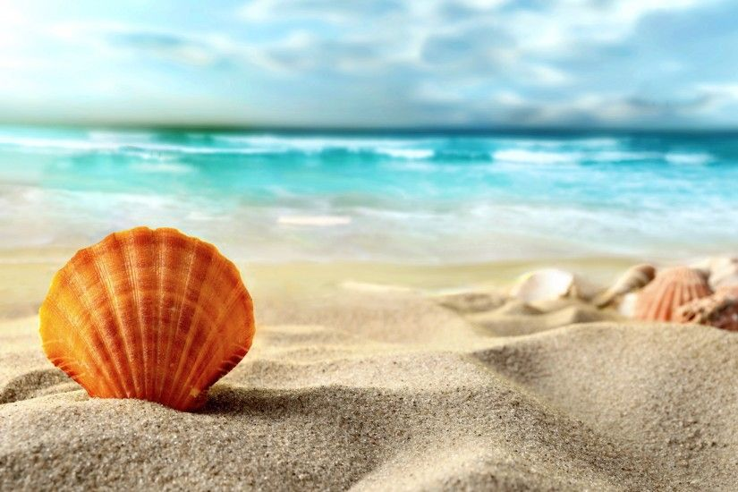 "Related HD wallpapers of ""Summer Sea Shells"""