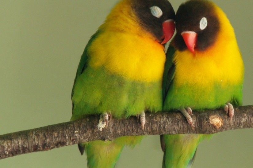 Download now full hd wallpaper lovebird couple romantic ...