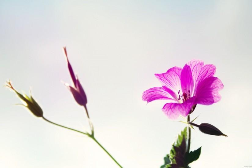 Flower Picture Art, Purple Flowers on Light White Background .