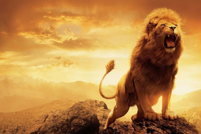 Lion Wallpaper HD Pictures One HD Wallpaper Pictures Backgrounds 1920×1200