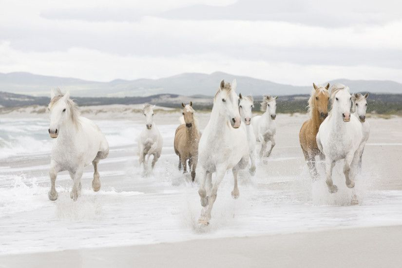 Animal background with a fast running horses on the beach