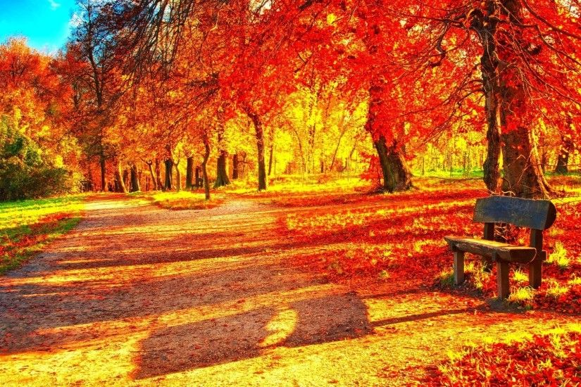 1920x1080 Leaf Tag - Leaves Leaf Fall Seasons Tree Autumn Nature Forest  Color Season Landscape 3d Wallpaper