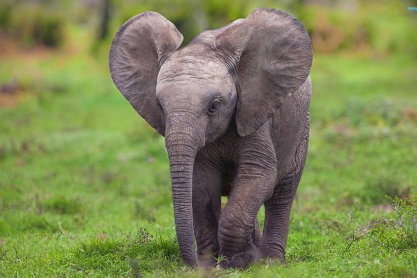 Elephant Wallpaper Download Free Cool Full Hd Wallpapers