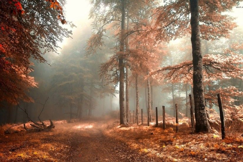Trees, 5k, 4k wallpaper, 8k, sunlight, leaves, forest, branches  (horizontal) | Wallpapers | Pinterest | Sunlight