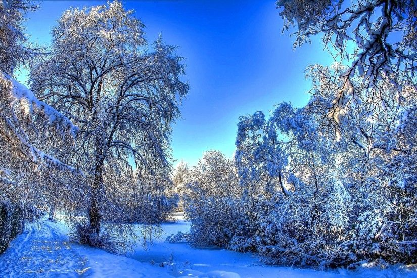 Winter-snow-branches-wallpaper-2560x1600