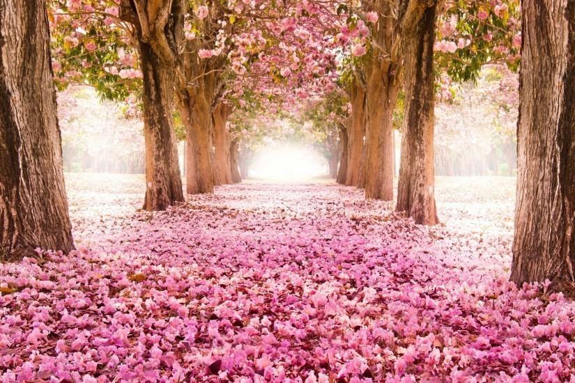 Indus Pink Carpet Beautiful Scenery Trees Path Forest Flowers Vintage  Flower Wallpaper Iphone 5