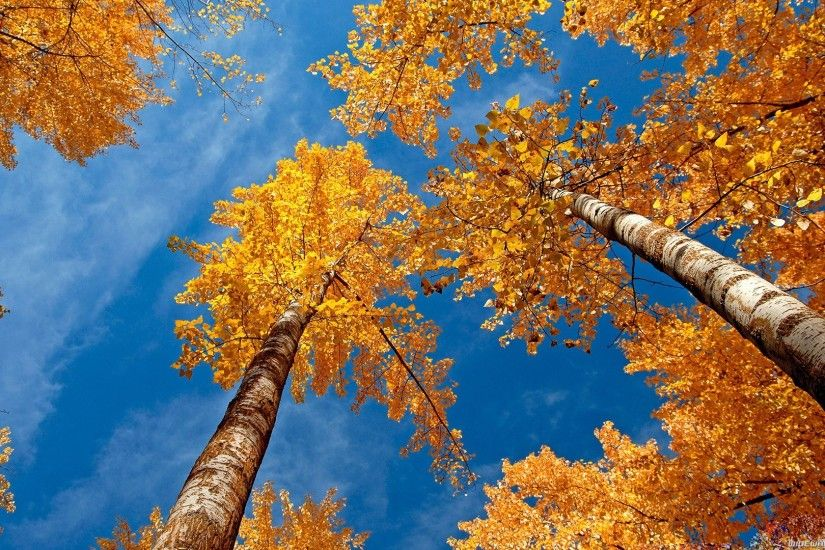 10 Beautiful Autumn Wallpapers