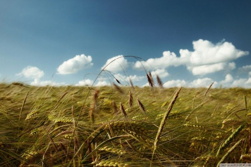 ... Image Nature Summer Sky Scenery Grasslands 3200x2361 ...