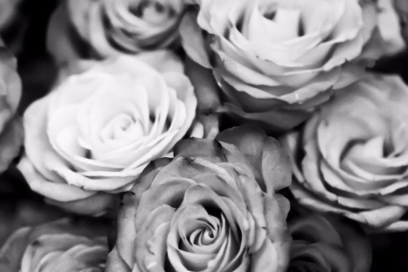Related to Black and White Roses Wallpaper 4K