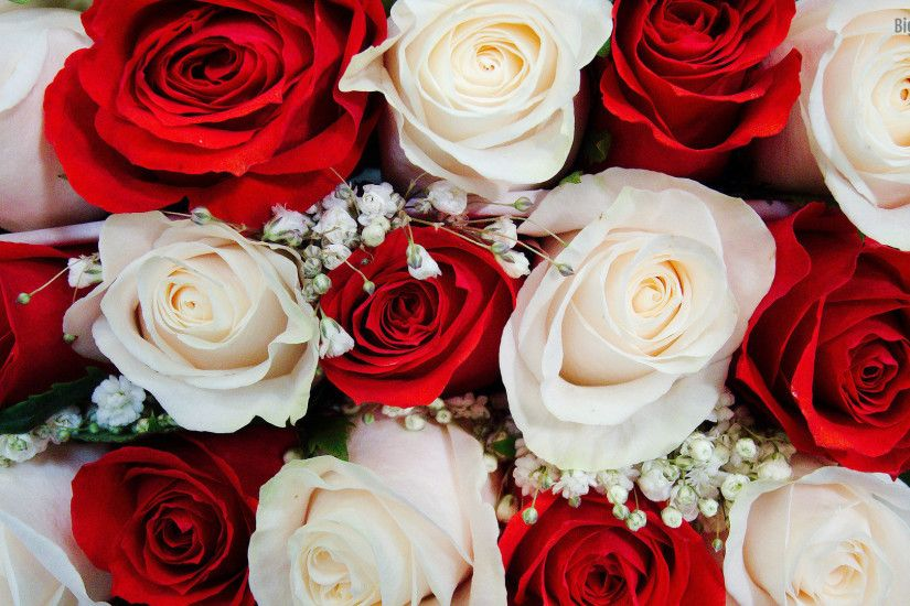 red and white roses wallpaper