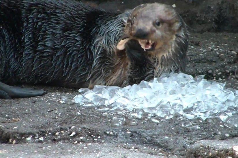 Sea Otters holding hands by koolguy on DeviantArt