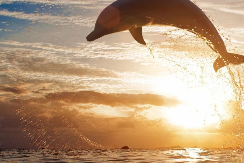 Preview wallpaper dolphin, jump, sea, sunset 2048x2048
