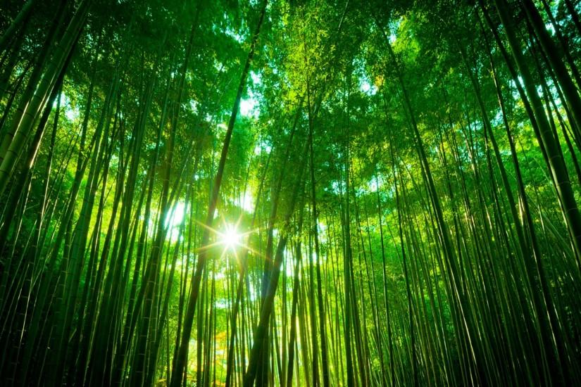 most popular bamboo wallpaper 1920x1200