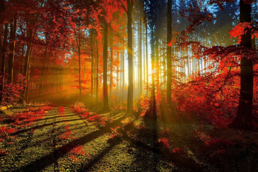 Autumn Red Forest
